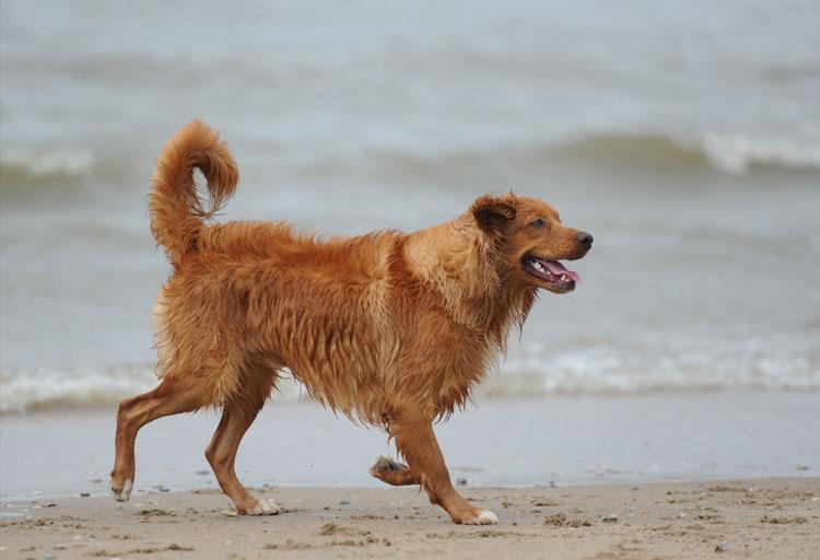 25 augustus 2012, terugkomdag op het strand